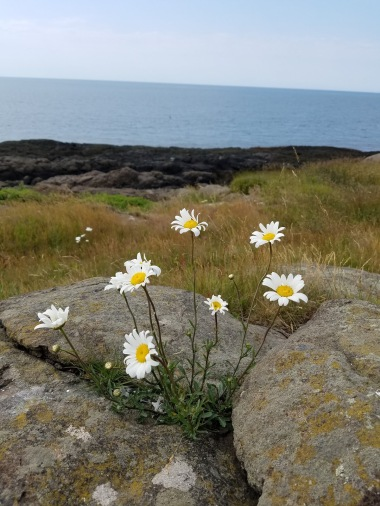 Flowers at Beautiful Cove, Long Island, NS